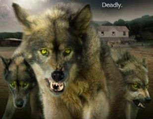 Wolf Town (2011) Dual Audio Download HD 480p 200MB