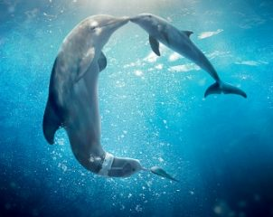 Dolphin Tale 2 (2014) Download In English 400MB 480p